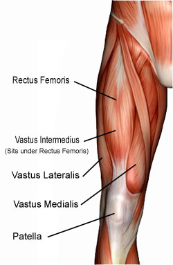 quad-muscles-diagram