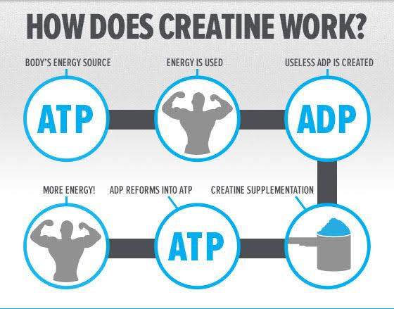 How Creatine works